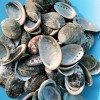 Scoici Abalone mici 200 gr